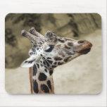 Primer lindo de la jirafa de la cabeza y del cuell tapetes de ratón