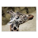 Primer lindo de la jirafa de la cabeza y del cuell felicitación