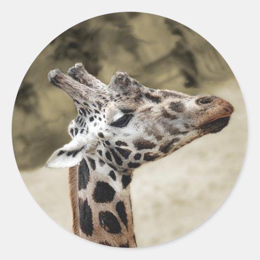 Primer lindo de la jirafa de la cabeza y del pegatina redonda