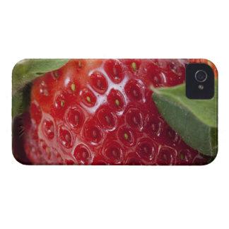 Primer lleno del marco de una fresa funda para iPhone 4 de Case-Mate
