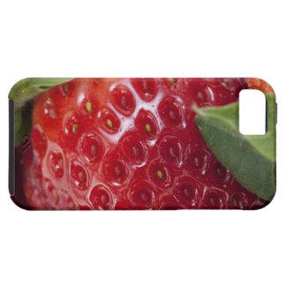 Primer lleno del marco de una fresa funda para iPhone SE/5/5s