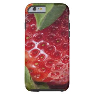 Primer lleno del marco de una fresa funda resistente iPhone 6