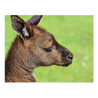Primer o retrato del wallaby postal