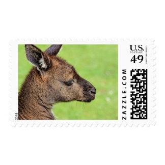 Primer o retrato del wallaby sellos postales