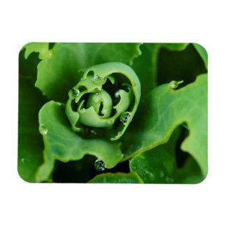 Primer, planta suculenta con las gotitas de agua imán rectangular