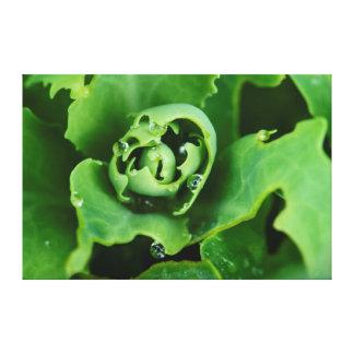 Primer, planta suculenta con las gotitas de agua lona envuelta para galerías