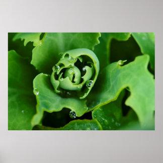 Primer, planta suculenta con las gotitas de agua impresiones