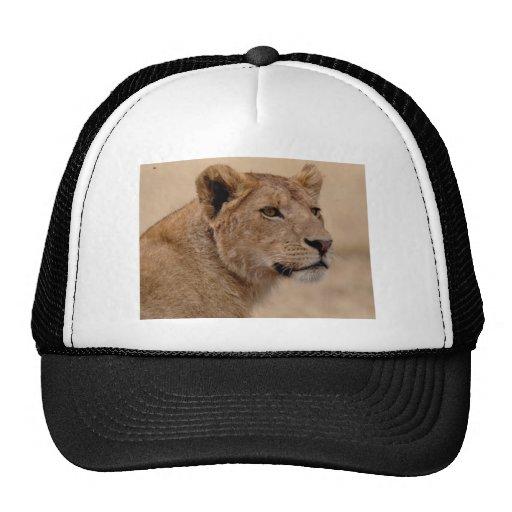 Primer principal de la leona gorro de camionero