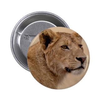 Primer principal de la leona pin