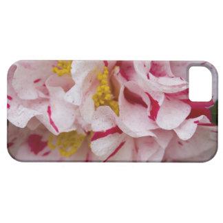 Primer rayado de la flor de la camelia del caramel iPhone 5 Case-Mate cobertura