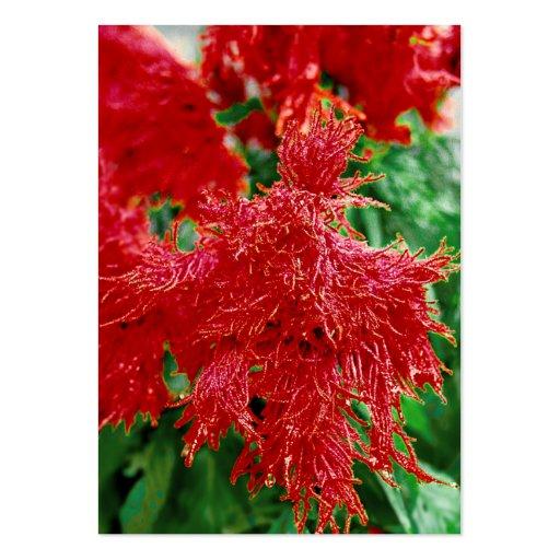 Primer rojo de la flor del ATC de ACEO Tarjetas De Visita