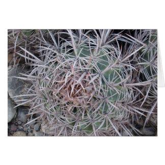 Primer rojo del cactus de barril felicitación