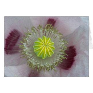 Primer rosado de la amapola tarjeta de felicitación