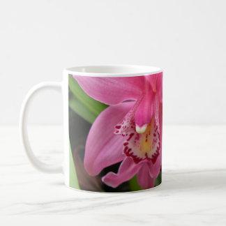 Primer rosado de la orquídea taza básica blanca