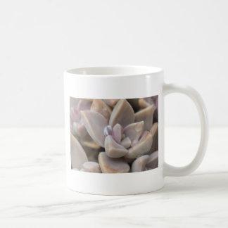 Primer suculento de la planta - macro suculenta de taza