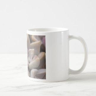 Primer suculento de la planta - macro suculenta de taza clásica