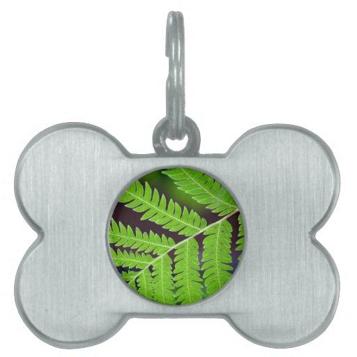 Primer verde de la hoja placas de nombre de mascota