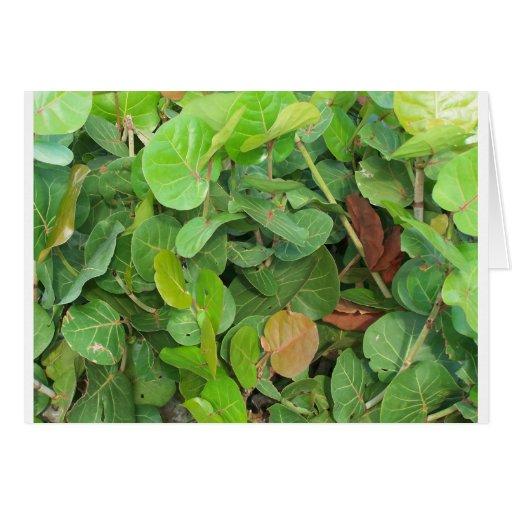 Primer verde y marrón de Seagrape Tarjeta De Felicitación