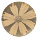 Primer viejo 2 de la flor del cosmos del amarillo  plato