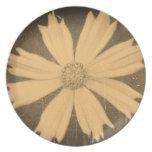 Primer viejo 4 de la flor del cosmos del amarillo  plato