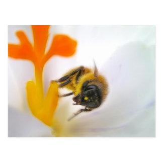 Primera flor de la primavera tarjetas postales
