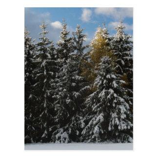 Primera nieve 2009 postal