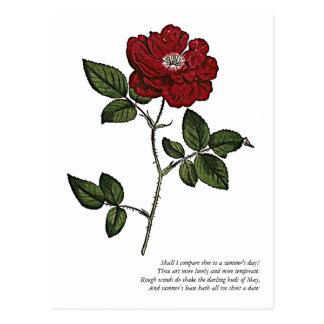 Primeras 4 líneas de soneto # 18 de Shakespeare Postales