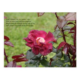 Primeras 4 líneas de soneto # 18 de Shakespeare Tarjeta Postal