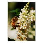 Primero de la serie de la abeja tarjeta