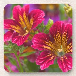 Primers pintados de la lengua de sus floraciones - posavaso