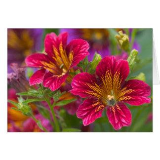 Primers pintados de la lengua de sus floraciones - tarjeta de felicitación