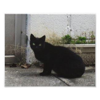 """Primitive City Cat 10"""" x 8"""" Print 01"""