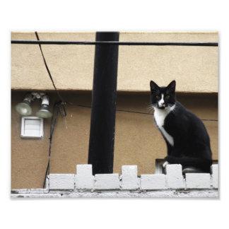 """Primitive City Cat 10"""" x 8"""" Print 03"""