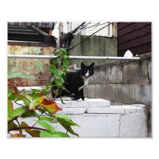 """Primitive City Cat 10"""" x 8"""" Print 04"""