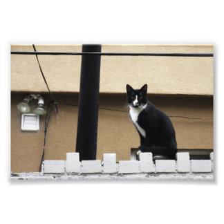 """Primitive City Cat 6"""" x 4"""" Print 03"""