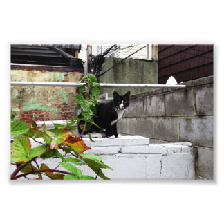"""Primitive City Cat 6"""" x 4"""" Print 04"""