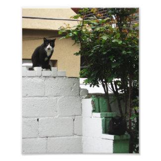 """Primitive City Cats 10"""" x 8"""" Print"""