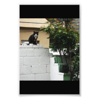 """Primitive City Cats 6"""" x 4"""" Print"""