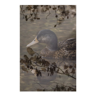 Primitive country outdoor lake pond wild duck stationery
