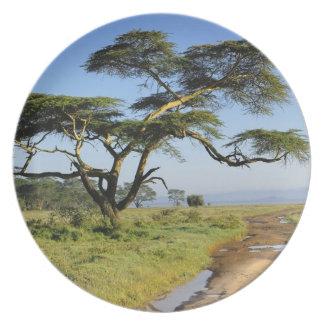 Primitive dirt road and acacia tree, Lake Nakuru Melamine Plate