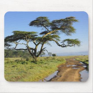 Primitive dirt road and acacia tree, Lake Nakuru Mouse Pad