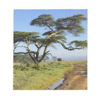 Primitive dirt road and acacia tree, Lake Nakuru Memo Pad