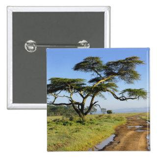 Primitive dirt road and acacia tree, Lake Nakuru Pinback Button