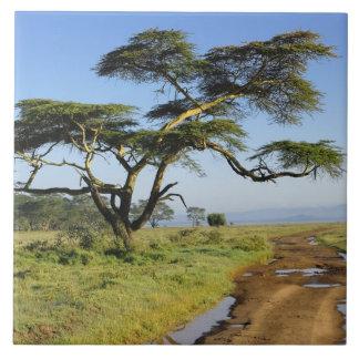 Primitive dirt road and acacia tree, Lake Nakuru Tile