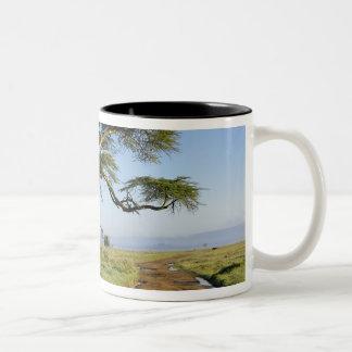 Primitive dirt road and acacia tree, Lake Nakuru Two-Tone Coffee Mug