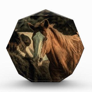 Primitive rustic western country wild horse acrylic award