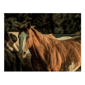 Primitive rustic western country wild horse postcard