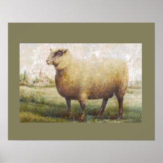 Primitive Sheep Poster
