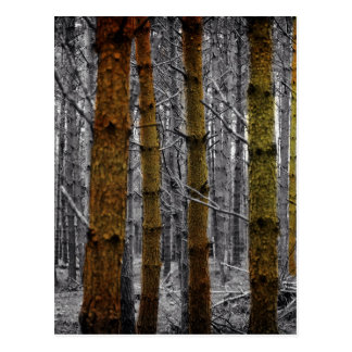 Primitive Western Country Camouflage Pine Trees Postcard