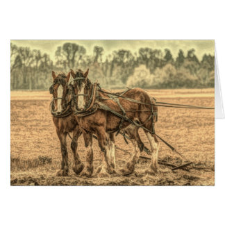 Primitive Western country farm animal draft horses Card